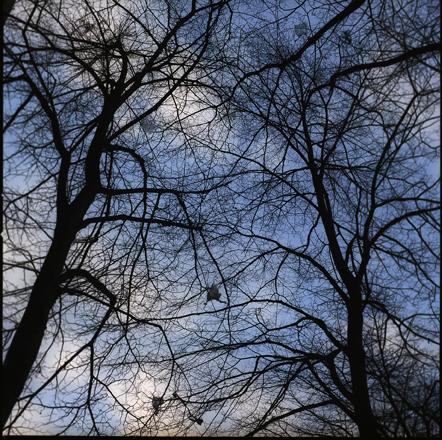 tree-bags72.jpg